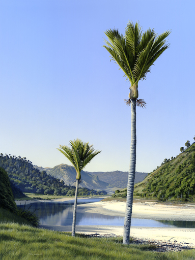 Nikau Point, Anatori River